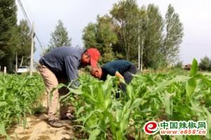临泽:蔬菜种植实现效益翻倍