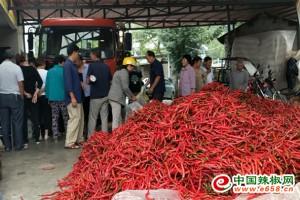 勉县:辣椒丰收,农民喜笑颜开 ()