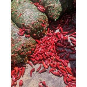大量供应北京红