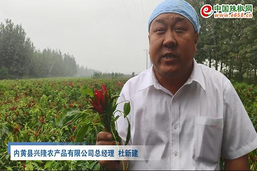 内黄辣椒产业介绍
