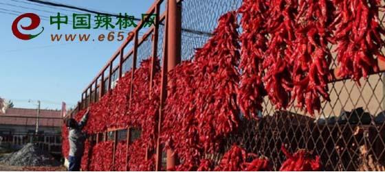cn)获悉,今年,吉林省农安县哈拉海镇种植辣椒喜获大丰收,农民们趁这几